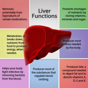 Liver finction by livertransplantpune.org