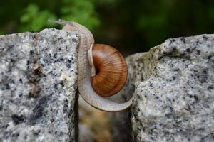 Snail overcoming cliff
