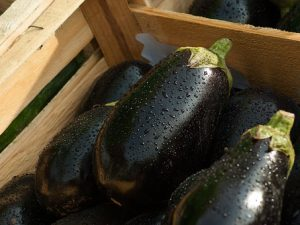 Eggplant in a crate